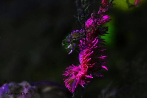 elias sardinien 005